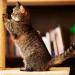 4 способи, як позбутися від шерсті домашніх тварин