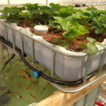 Модульна система аквапоніки для вирощування продуктів в квартирі