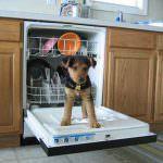 7 головних критеріїв вибору посудомийної машини для вашої кухні