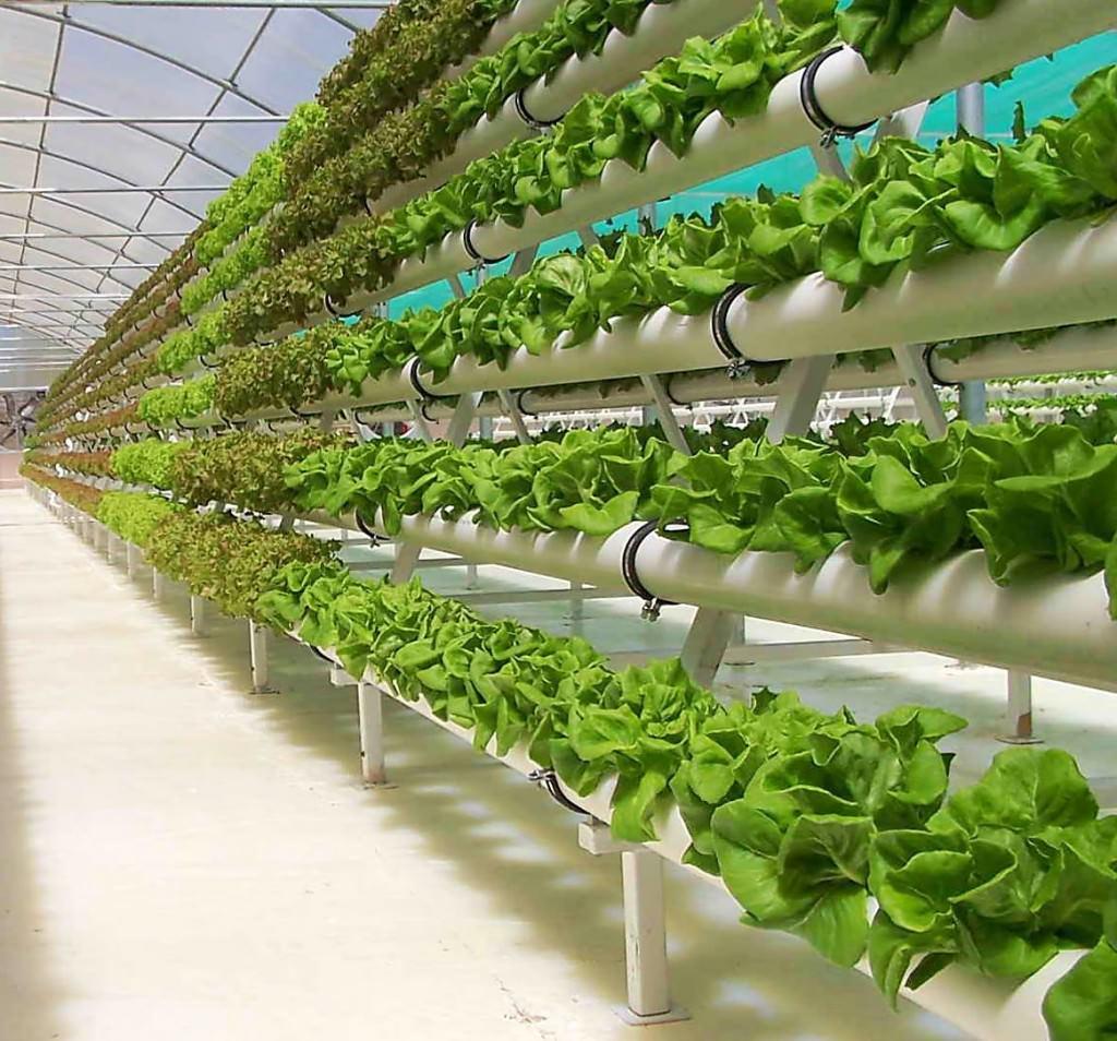 Гидропоника в домашних условиях: свежая зелень круглый год