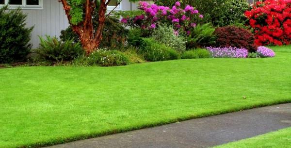 Какой вид газонной травы выбрать для посадки на даче или загородном участке?