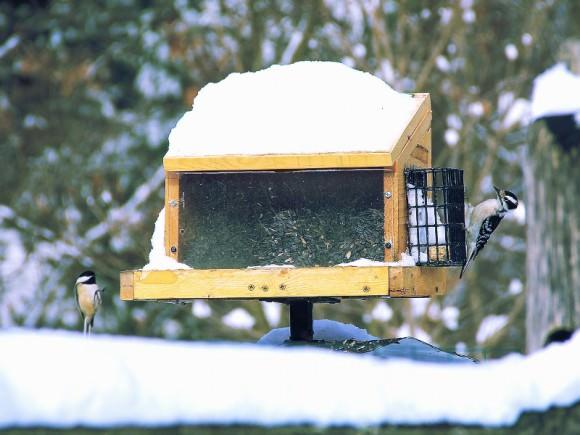 Кормушка для птиц: советы по изготовлению или приобретению