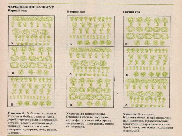 Правильная организация севооборота на дачном участке и таблица совместимости овощных культур
