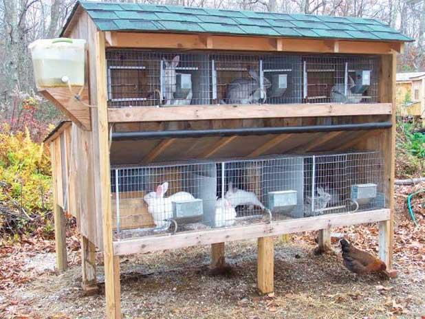 Советы по строительству клетки для кроликов своими руками, чертежи и видео