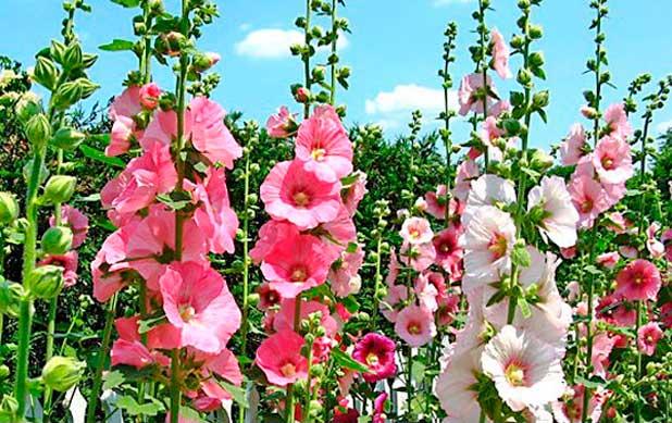 Выбираем цветы-многолетники для посадки из семян осенью