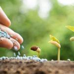Як вибрати мінеральні добрива для підвищення врожайності